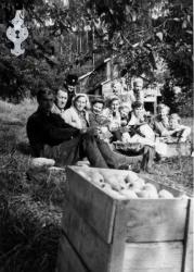 Eplehausting 1954 Kyrkjebø - #KvH 06-005 b